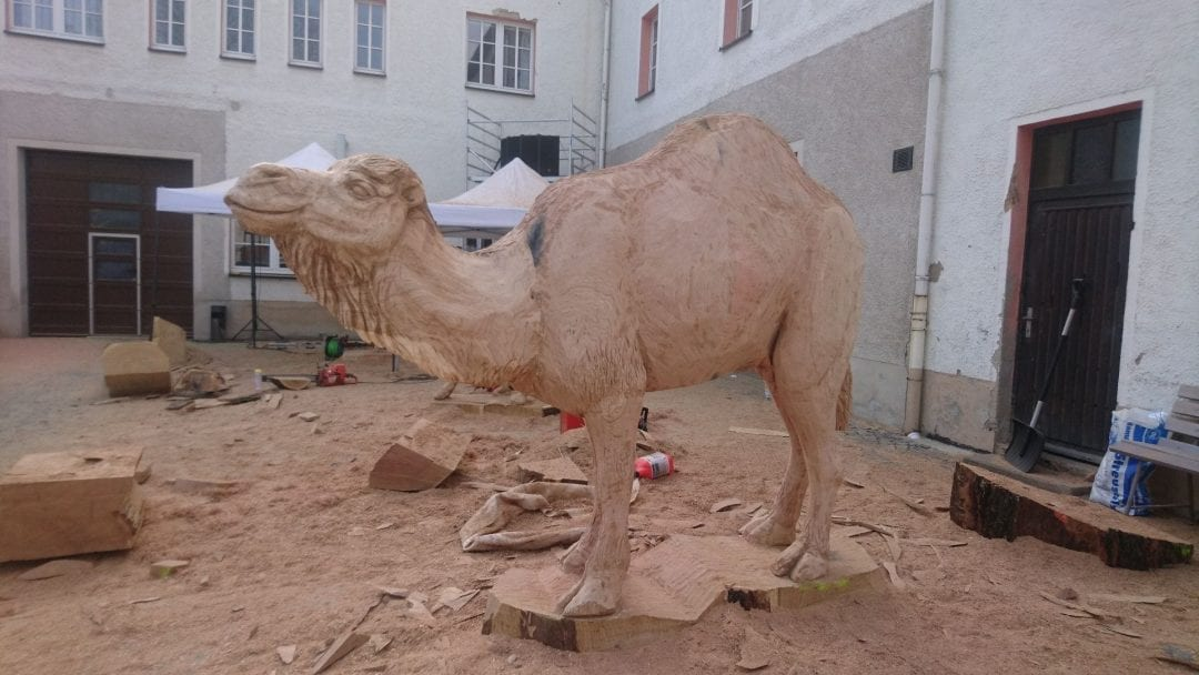Kamel (1)